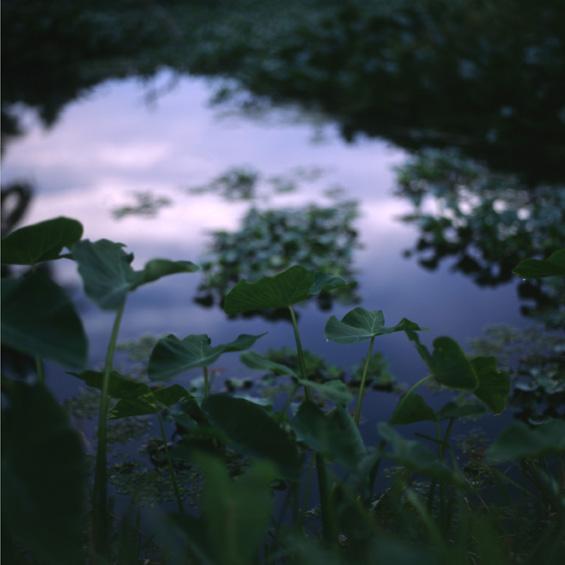 Aqua planta - India 2007