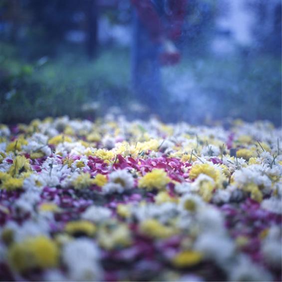 Fleur - India 2007